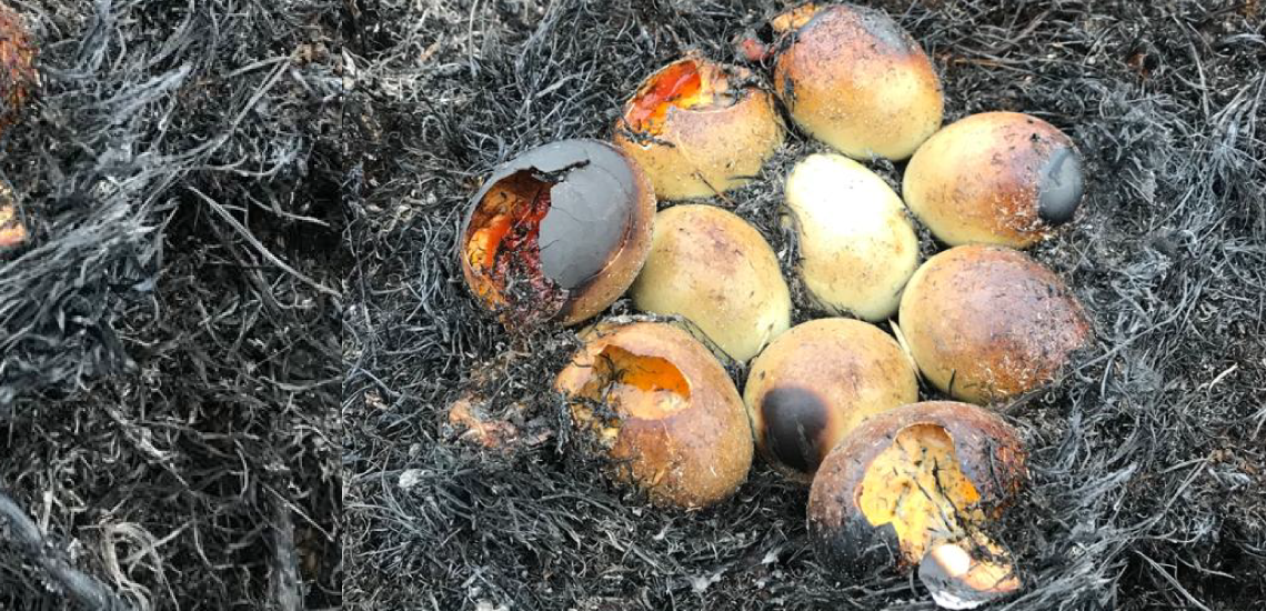 Image of Burnt nest with destroyed eggs